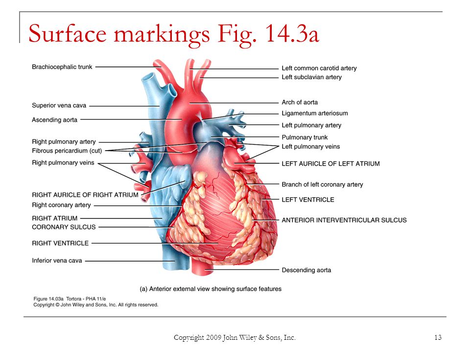 Copyright 2009 John Wiley & Sons, Inc. 13 Surface markings Fig. 14.3a