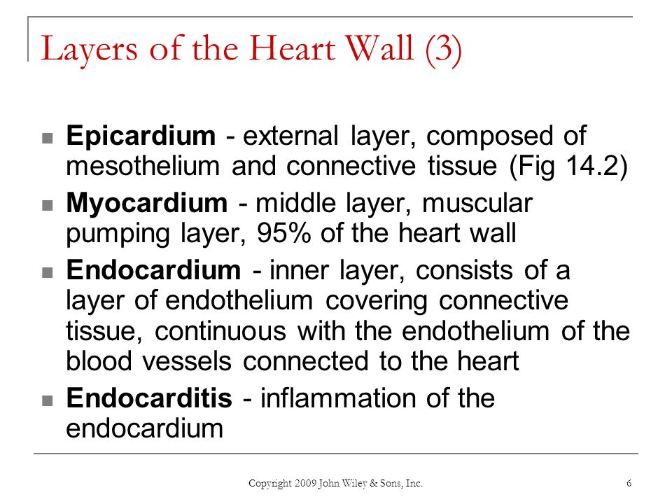 Copyright 2009 John Wiley & Sons, Inc. 6 Layers of the Heart Wall (3) Epicardium - external layer, composed of mesothelium and connective tissue (Fig