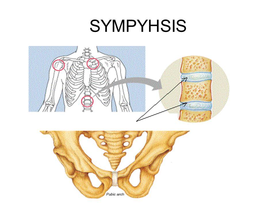 SYMPYHSIS