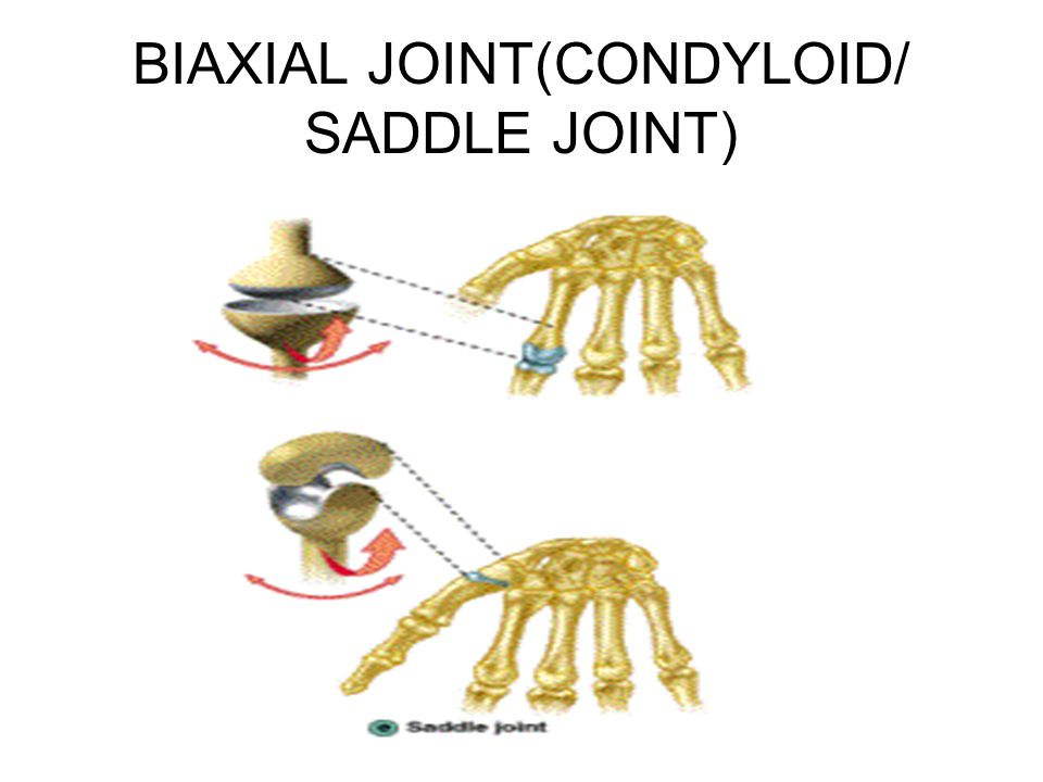 BIAXIAL JOINT(CONDYLOID/ SADDLE JOINT)