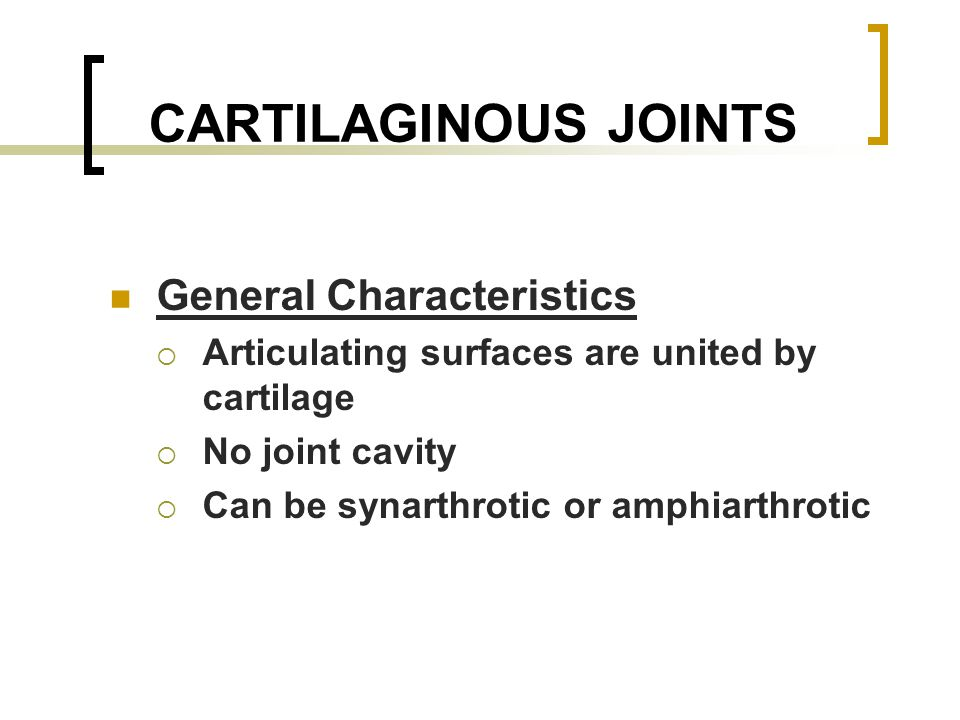 CARTILAGINOUS JOINTS General Characteristics  Articulating surfaces are united by cartilage  No joint cavity  Can be synarthrotic or amphiarthrotic
