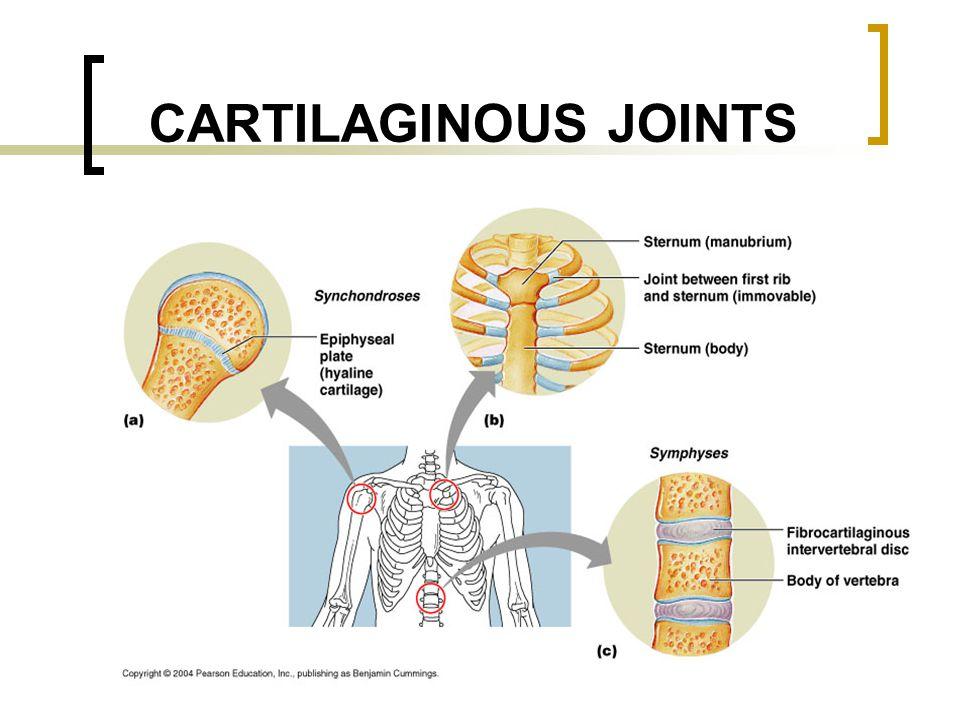 CARTILAGINOUS JOINTS