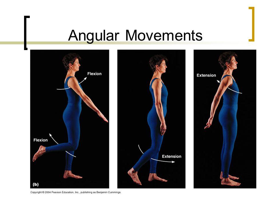 Angular Movements