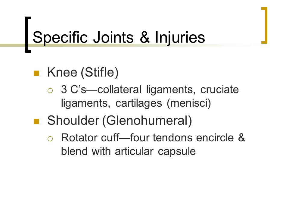 Specific Joints & Injuries Knee (Stifle)  3 C's—collateral ligaments, cruciate ligaments, cartilages (menisci) Shoulder (Glenohumeral)  Rotator cuff—four tendons encircle & blend with articular capsule