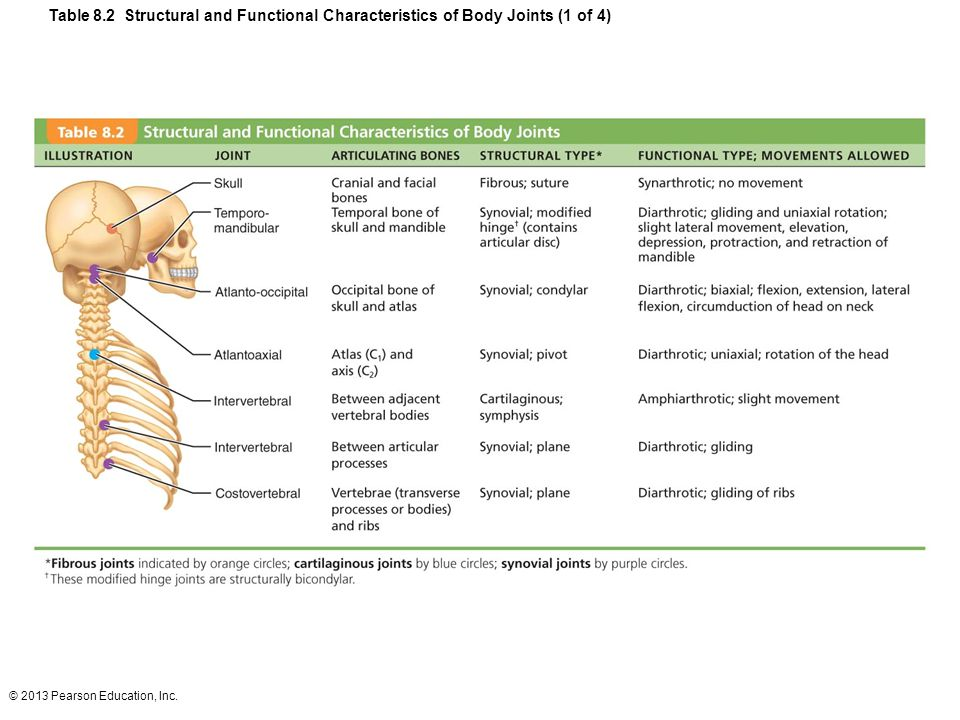 © 2013 Pearson Education, Inc. Table 8.2 Structural and Functional Characteristics of Body Joints (1 of 4)