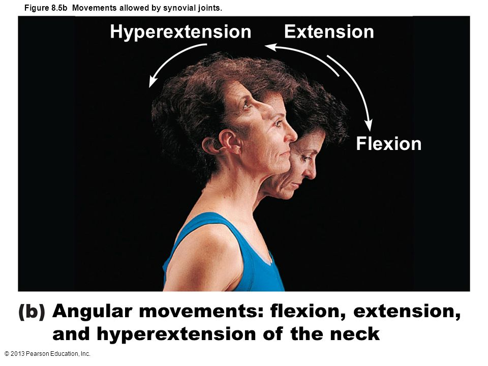 © 2013 Pearson Education, Inc. Figure 8.5b Movements allowed by synovial joints. HyperextensionExtension Flexion Angular movements: flexion, extension