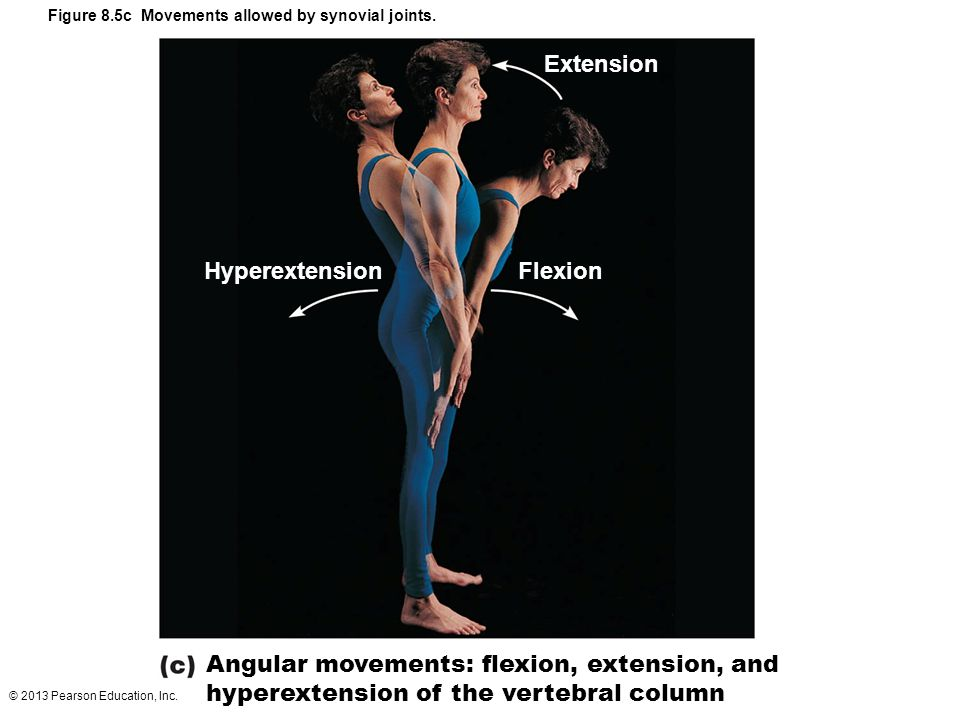 © 2013 Pearson Education, Inc. Figure 8.5c Movements allowed by synovial joints. Hyperextension Extension Flexion Angular movements: flexion, extensio
