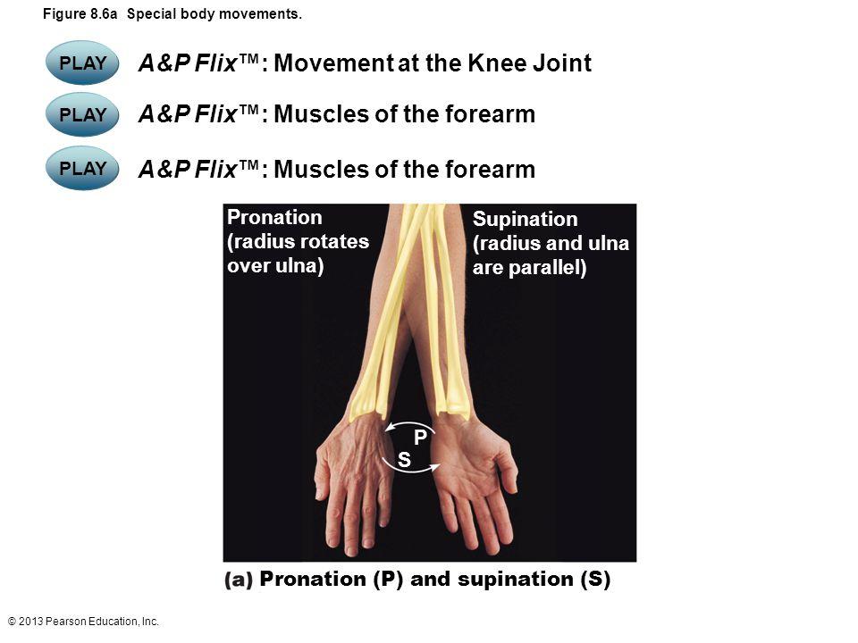 © 2013 Pearson Education, Inc. Figure 8.6a Special body movements. Pronation (radius rotates over ulna) Supination (radius and ulna are parallel) Pron