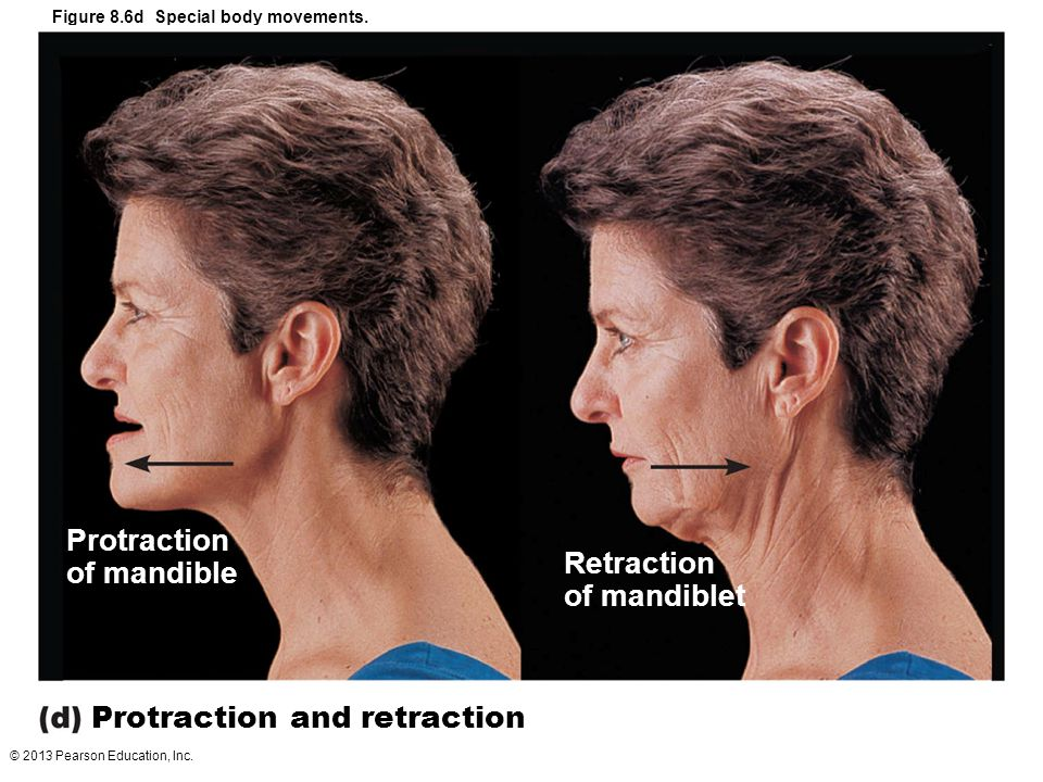 © 2013 Pearson Education, Inc. Figure 8.6d Special body movements. Protraction and retraction Retraction of mandiblet Protraction of mandible