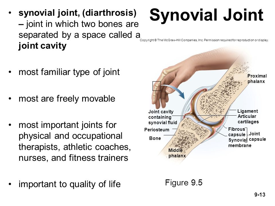 9-13 Synovial Joint synovial joint, (diarthrosis) – joint in which two bones are separated by a space called a joint cavity most familiar type of join