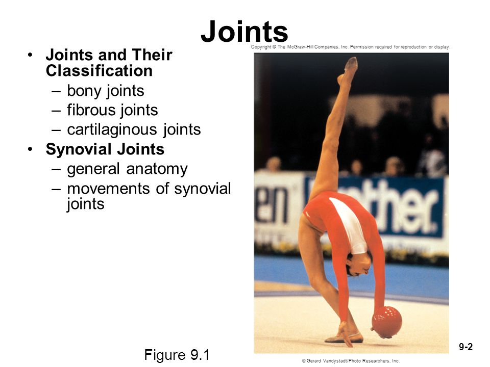 9-2 Joints Joints and Their Classification –bony joints –fibrous joints –cartilaginous joints Synovial Joints –general anatomy –movements of synovial
