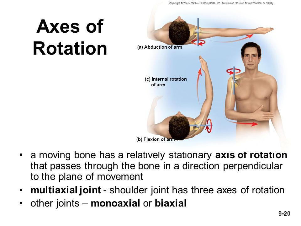 9-20 Axes of Rotation a moving bone has a relatively stationary axis of rotation that passes through the bone in a direction perpendicular to the plan