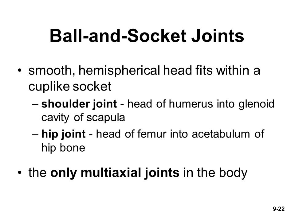 9-22 Ball-and-Socket Joints smooth, hemispherical head fits within a cuplike socket –shoulder joint - head of humerus into glenoid cavity of scapula –