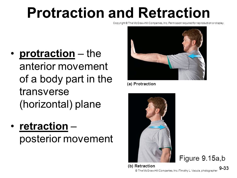 9-33 Protraction and Retraction protraction – the anterior movement of a body part in the transverse (horizontal) plane retraction – posterior movemen