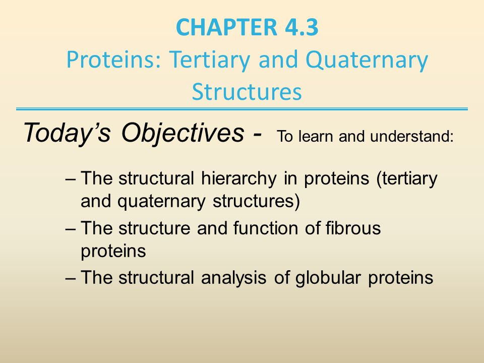 CHAPTER 4.3 Proteins: Tertiary and Quaternary Structures –The structural hierarchy in proteins (tertiary and quaternary structures) –The structure and