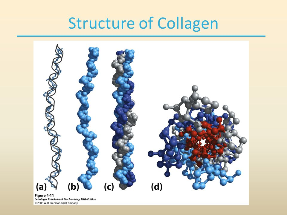 Structure of Collagen