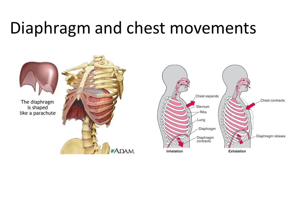 Diaphragm and chest movements