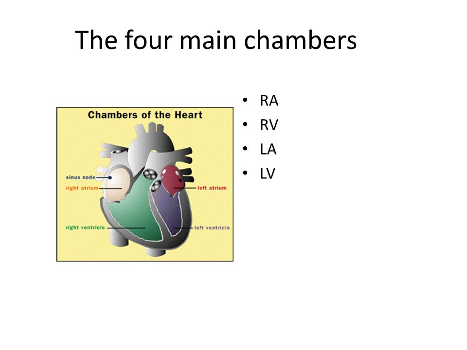 The four main chambers RA RV LA LV