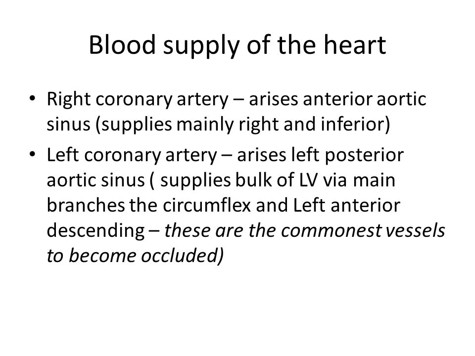 Blood supply of the heart Right coronary artery – arises anterior aortic sinus (supplies mainly right and inferior) Left coronary artery – arises left posterior aortic sinus ( supplies bulk of LV via main branches the circumflex and Left anterior descending – these are the commonest vessels to become occluded)