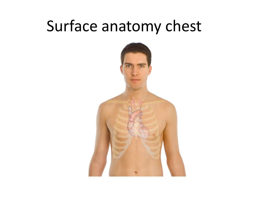 Surface anatomy chest