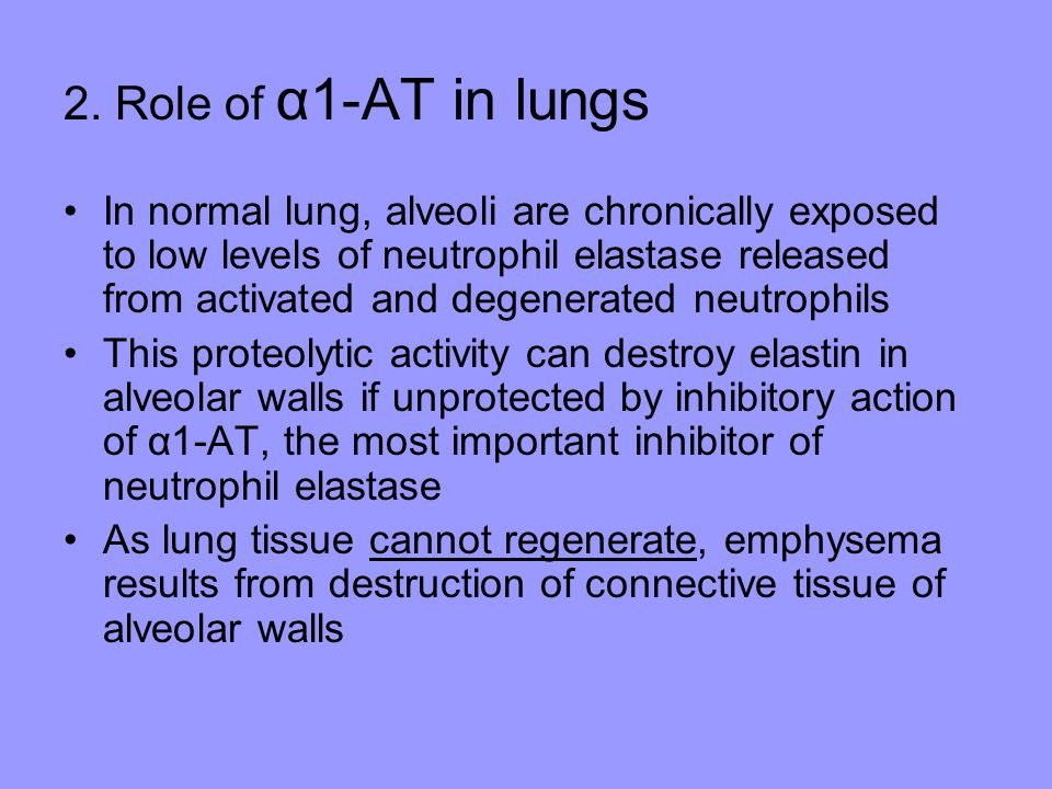 2. Role of α1-AT in lungs In normal lung, alveoli are chronically exposed to low levels of neutrophil elastase released from activated and degenerated