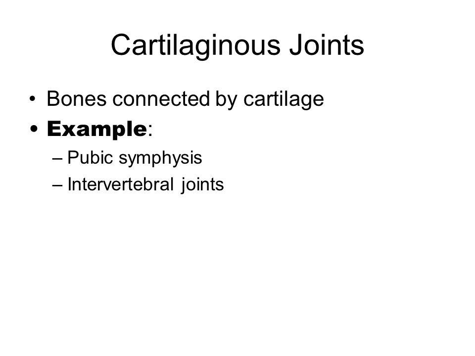 Cartilaginous Joints Bones connected by cartilage Example : –Pubic symphysis –Intervertebral joints