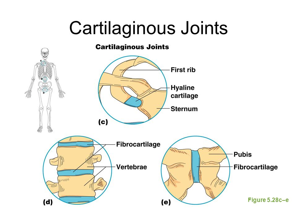 Developmental Aspects of the Skeletal System At birth, the skull bones are incomplete Bones are joined by fibrous membranes called fontanels Fontanels are completely replaced with bone within two years after birth