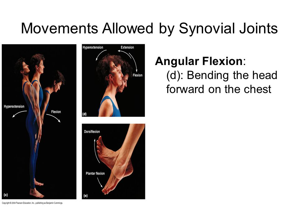 Movements Allowed by Synovial Joints Angular Flexion: (d): Bending the head forward on the chest