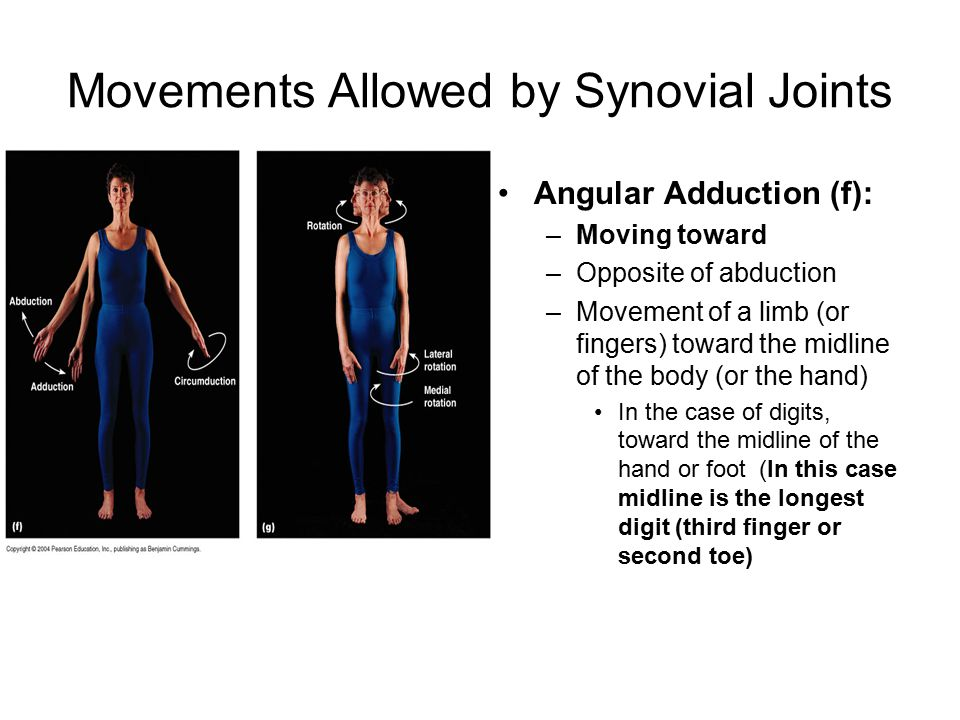Movements Allowed by Synovial Joints Angular Adduction (f): –Moving toward –Opposite of abduction –Movement of a limb (or fingers) toward the midline of the body (or the hand) In the case of digits, toward the midline of the hand or foot (In this case midline is the longest digit (third finger or second toe)