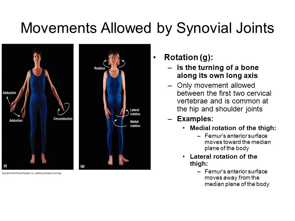 Movements Allowed by Synovial Joints Rotation (g): –Is the turning of a bone along its own long axis –Only movement allowed between the first two cervical vertebrae and is common at the hip and shoulder joints –Examples: Medial rotation of the thigh: –Femur's anterior surface moves toward the median plane of the body Lateral rotation of the thigh: –Femur's anterior surface moves away from the median plane of the body