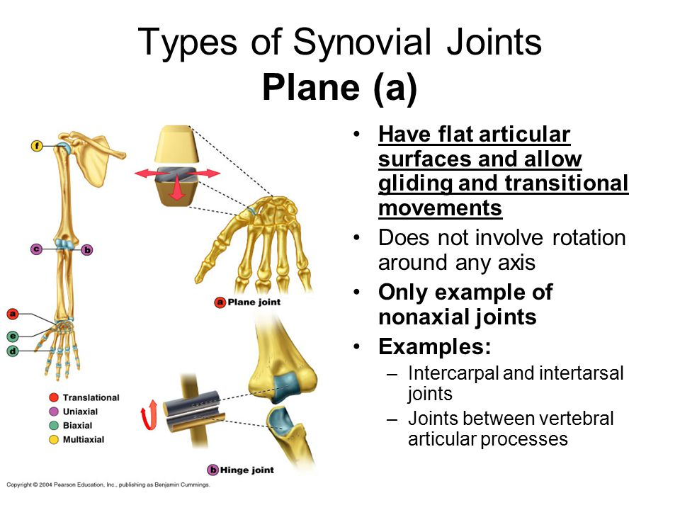 Types of Synovial Joints Plane (a) Have flat articular surfaces and allow gliding and transitional movements Does not involve rotation around any axis Only example of nonaxial joints Examples: –Intercarpal and intertarsal joints –Joints between vertebral articular processes