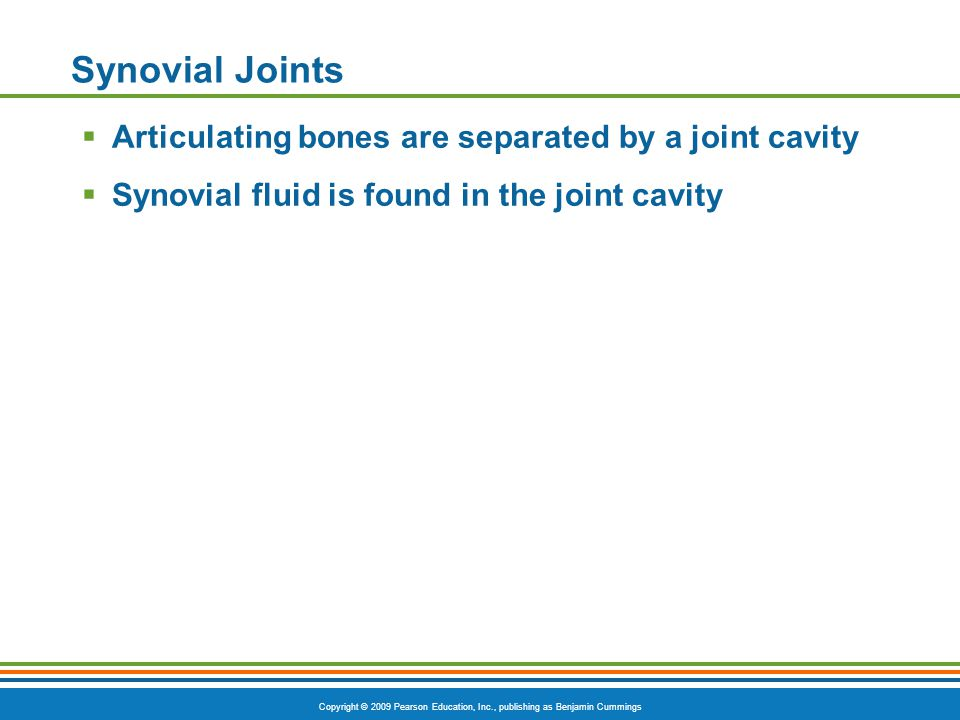 Copyright © 2009 Pearson Education, Inc., publishing as Benjamin Cummings Synovial Joints  Articulating bones are separated by a joint cavity  Synovial fluid is found in the joint cavity