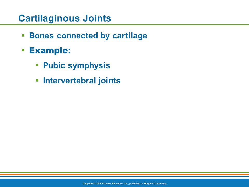 Copyright © 2009 Pearson Education, Inc., publishing as Benjamin Cummings Cartilaginous Joints  Bones connected by cartilage  Example :  Pubic symphysis  Intervertebral joints