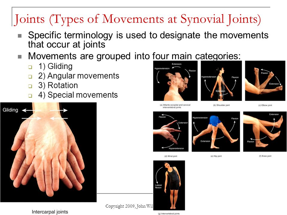Copyright 2009, John Wiley & Sons, Inc. Joints (Types of Movements at Synovial Joints) Specific terminology is used to designate the movements that oc