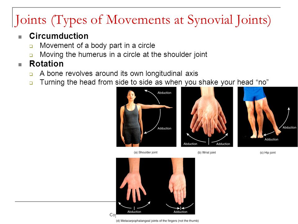 Copyright 2009, John Wiley & Sons, Inc. Joints (Types of Movements at Synovial Joints) Circumduction  Movement of a body part in a circle  Moving th