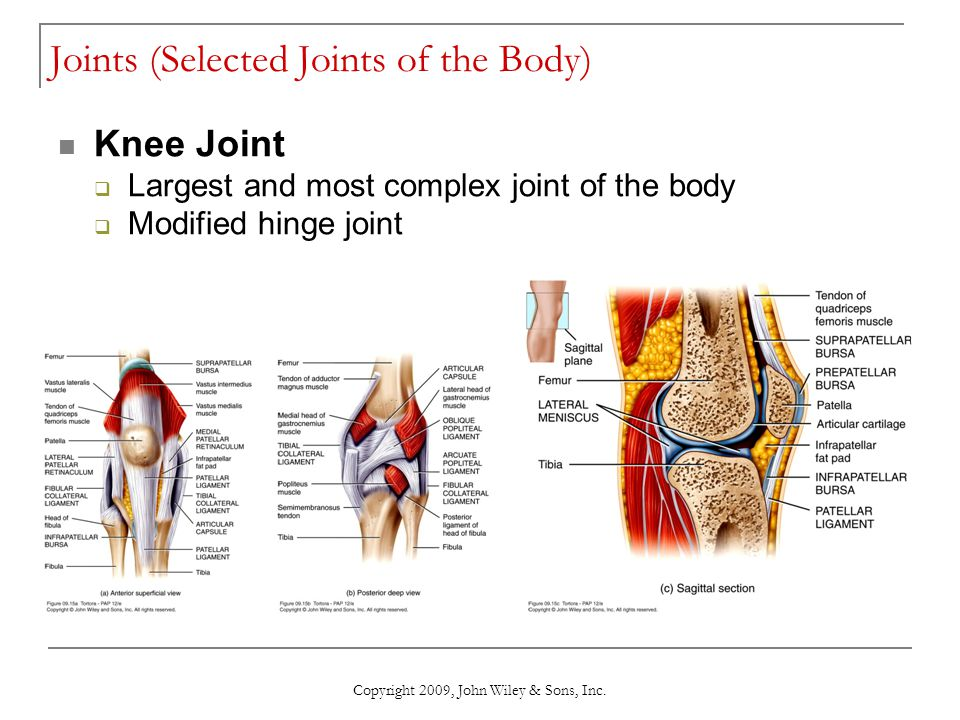 Copyright 2009, John Wiley & Sons, Inc. Joints (Selected Joints of the Body) Knee Joint  Largest and most complex joint of the body  Modified hinge