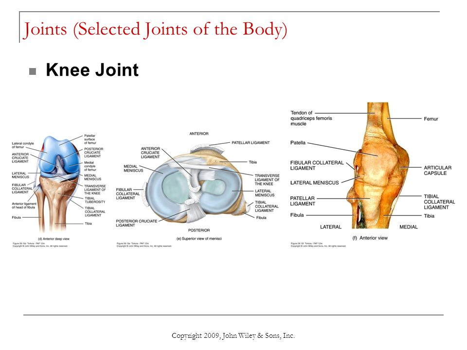 Copyright 2009, John Wiley & Sons, Inc. Joints (Selected Joints of the Body) Knee Joint