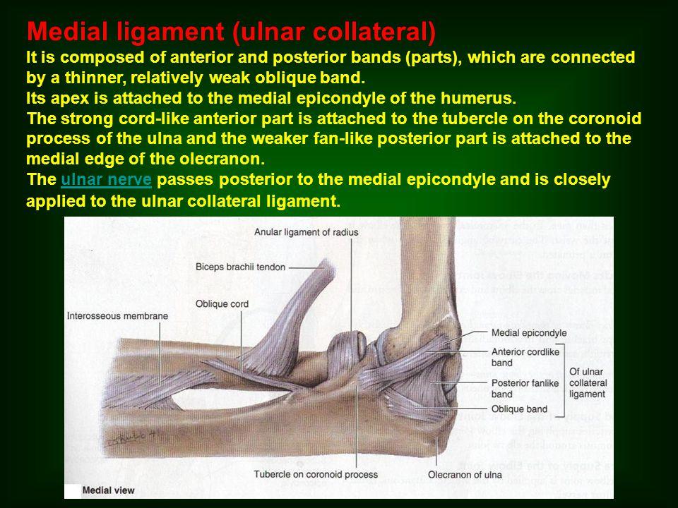 Distal radioulnar joint