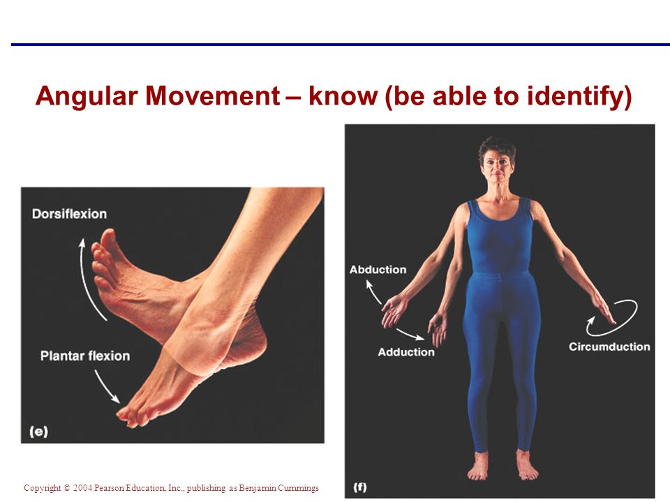 Copyright © 2004 Pearson Education, Inc., publishing as Benjamin Cummings Angular Movement – know (be able to identify)