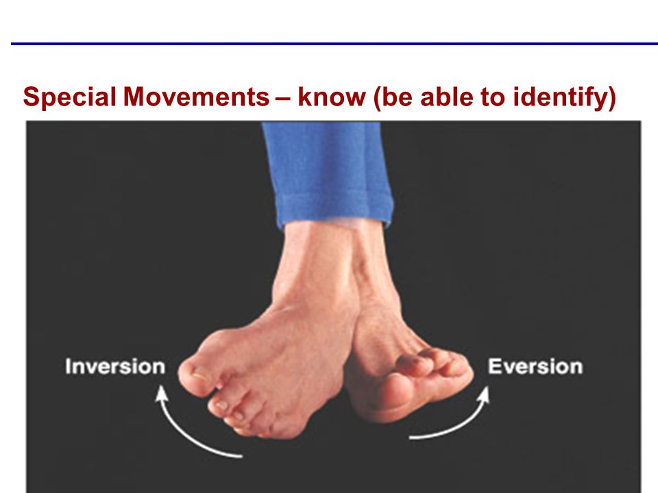 Copyright © 2004 Pearson Education, Inc., publishing as Benjamin Cummings Special Movements – know (be able to identify)