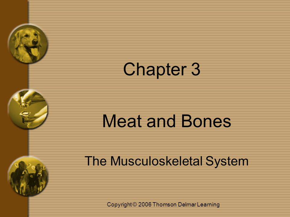 Copyright © 2006 Thomson Delmar Learning Muscle Terms kinesio/o and -kinesis mean movement –Kinesiology is the study of movement anti- = against agon = struggle –Antagonistic muscles work against or opposite other muscles syn = together erg = work –Synergist muscles work with other muscles to produce movement