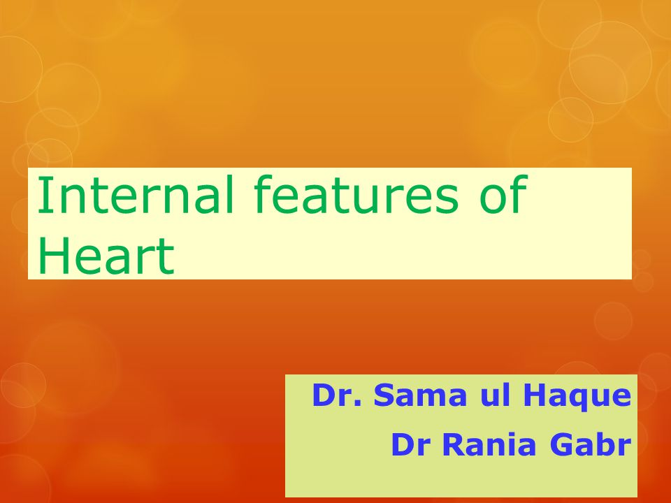 Internal features of Heart Dr. Sama ul Haque Dr Rania Gabr