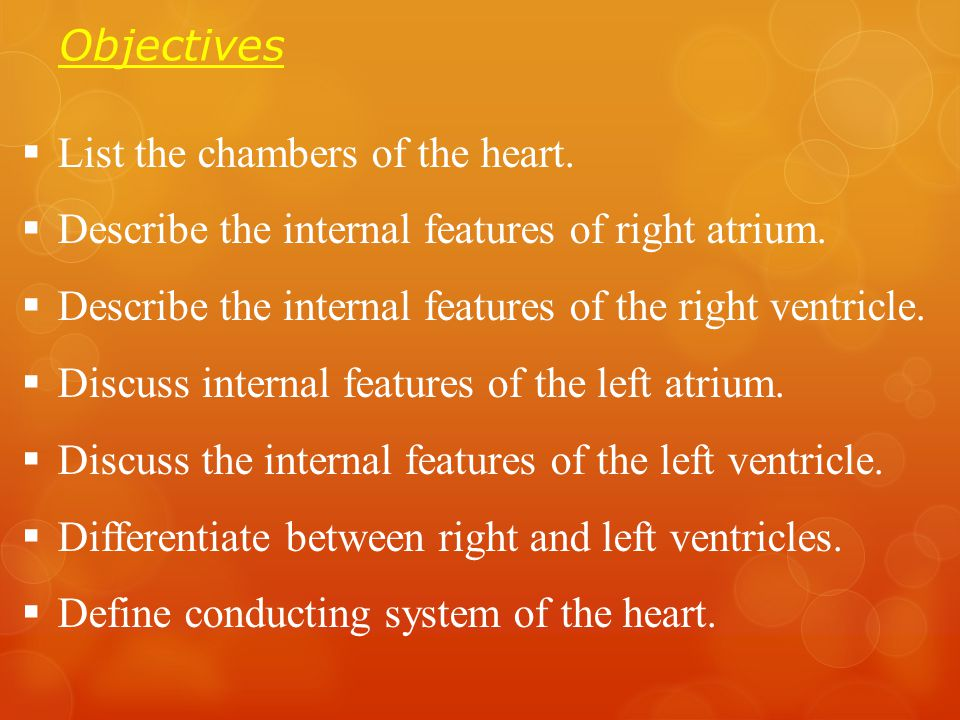 Objectives  List the chambers of the heart.  Describe the internal features of right atrium.