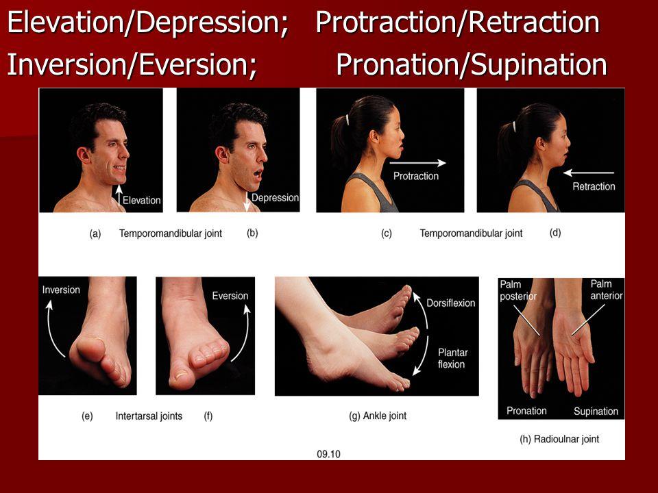 Elevation/Depression; Protraction/Retraction Inversion/Eversion;Pronation/Supination