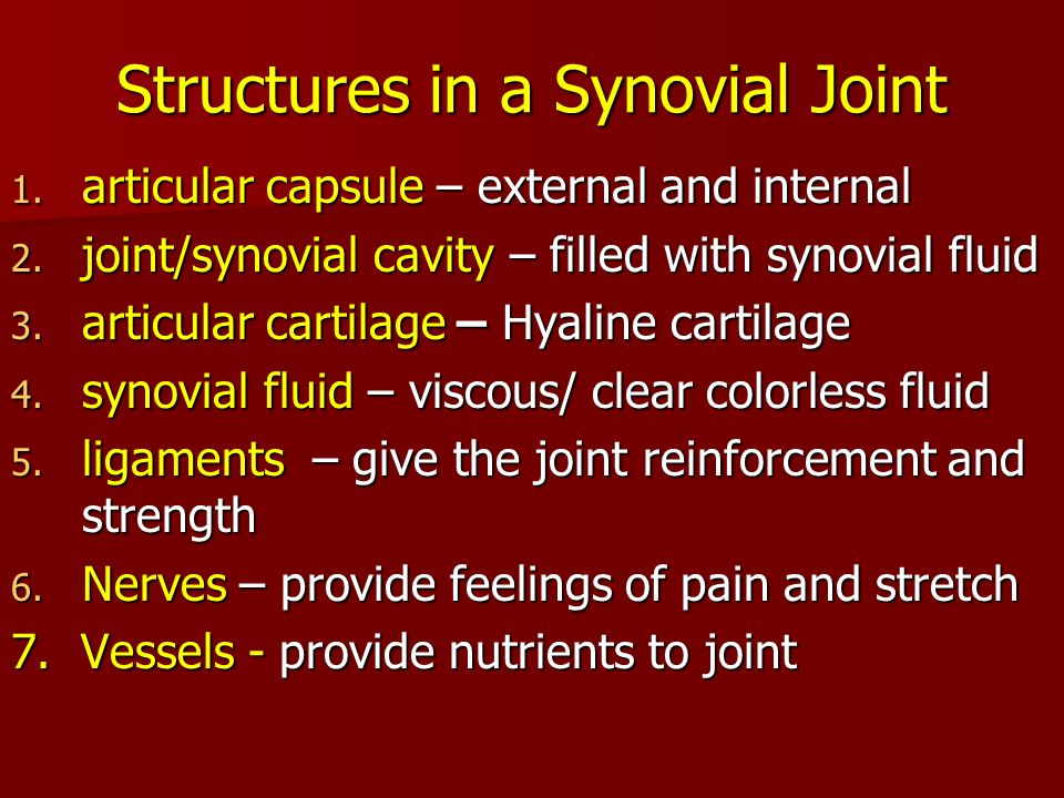 Structures in a Synovial Joint 1. articular capsule – external and internal 2. joint/synovial cavity – filled with synovial fluid 3. articular cartila