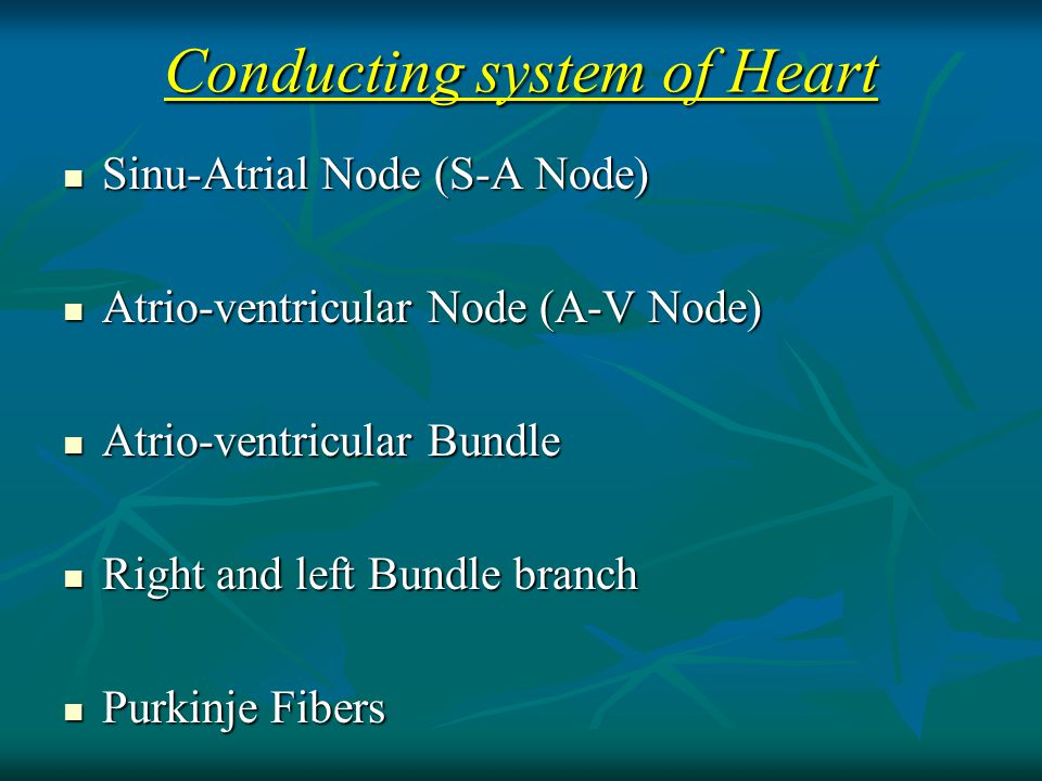Sinu-Atrial Node (S-A Node) Sinu-Atrial Node (S-A Node) Atrio-ventricular Node (A-V Node) Atrio-ventricular Node (A-V Node) Atrio-ventricular Bundle Atrio-ventricular Bundle Right and left Bundle branch Right and left Bundle branch Purkinje Fibers Purkinje Fibers Conducting system of Heart
