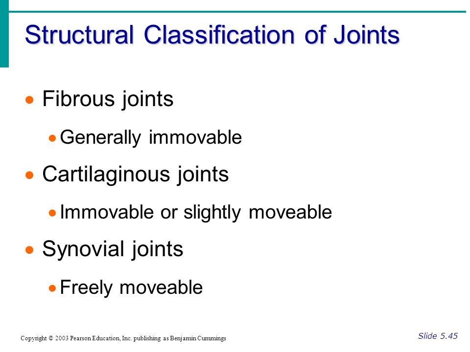 Structural Classification of Joints Slide 5.45 Copyright © 2003 Pearson Education, Inc.