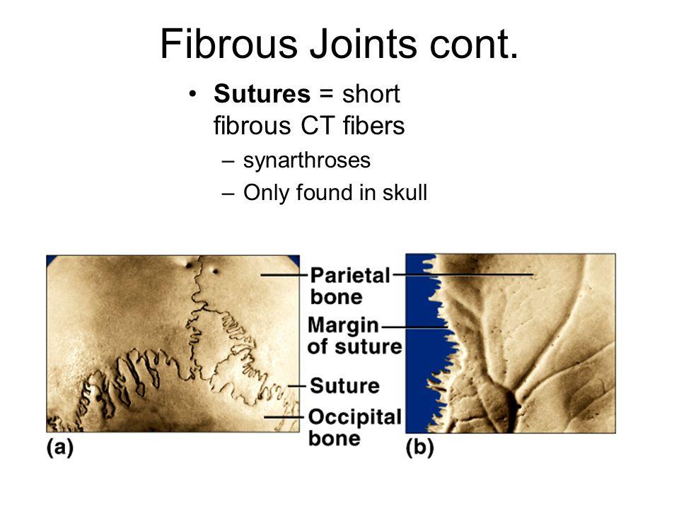 Fibrous Joints cont.