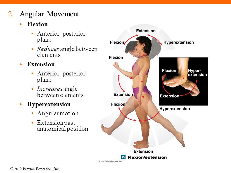 © 2012 Pearson Education, Inc. 2.Angular Movement Flexion Anterior–posterior plane Reduces angle between elements Extension Anterior–posterior plane I