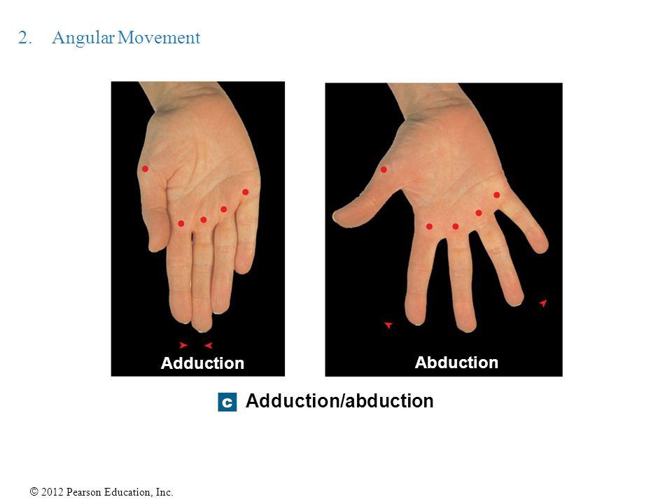 © 2012 Pearson Education, Inc. 2.Angular Movement Adduction/abduction Abduction Adduction